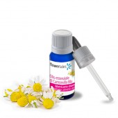 Chamomile blue essential oil