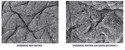 abilità l'immagine per vedere al microscopio quanto gli EPS Flower Tales sono dermoaffini alla pelle